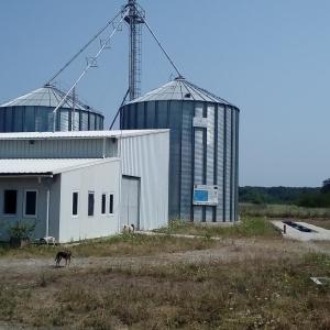 Pig farm located in Letca Nouă, Giurgiu county