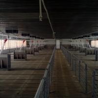 Fermă creștere suine (porci) situată în Letca Nouă, jud. Giurgiu