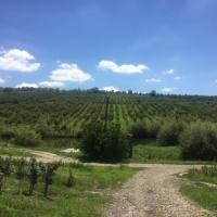 Tree farm, Petriş, Bistriţa Năsăud County