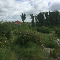Teren intravilan liber cu utilizare rezidentiala în Videle, județul Teleorman