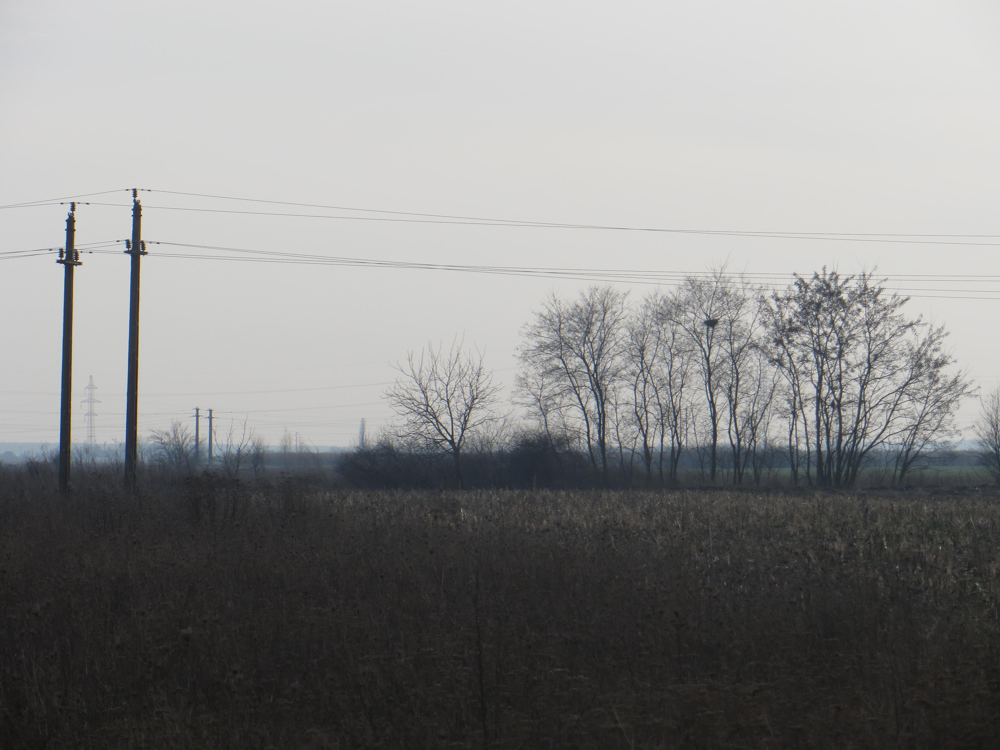 Teren intravilan, zona drumul Careiului, jud. Satu Mare