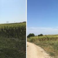 Terenuri extravilane Cocorăști, jud. Prahova, lot 1, în suprafață totală de 176.611 mp